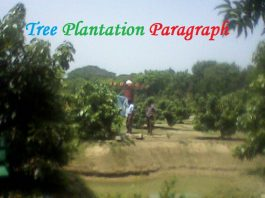tree plantation paragraph