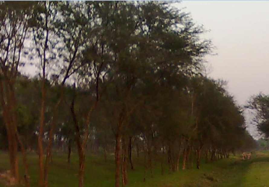 Paragraph Tree Plantation